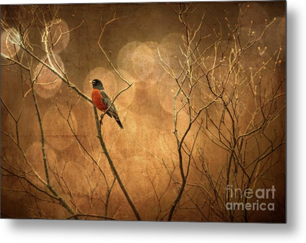 Metal Print featuring the photograph Robin by Lois Bryan