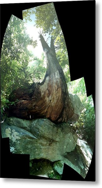 Root Over Rock Metal Print