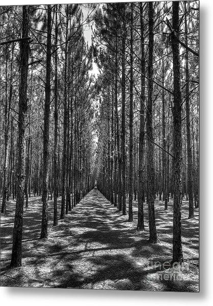 Rows Of Pines Vertical Metal Print