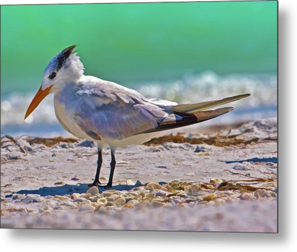 Royal Stance Metal Print by Delores Knowles