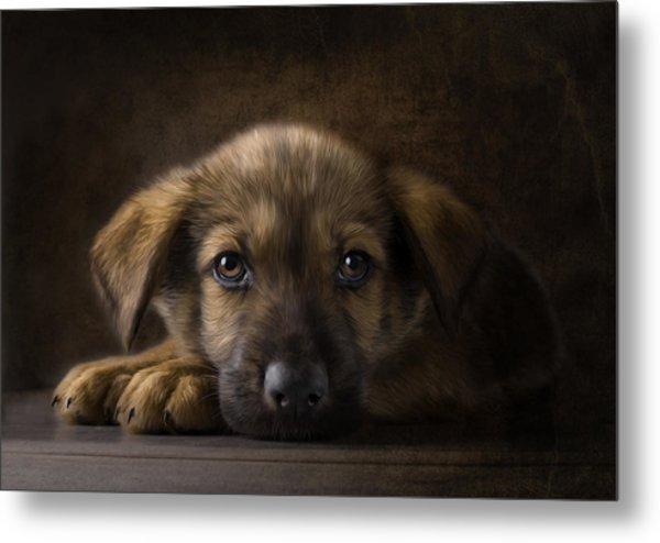 Sad Puppy Metal Print