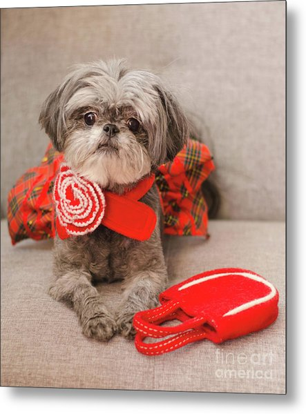 Scarlett And Red Purse Metal Print