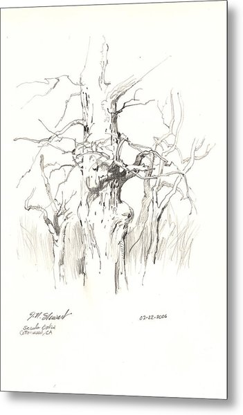 Scrub Oaks In Cottonwood Metal Print by John Norman Stewart