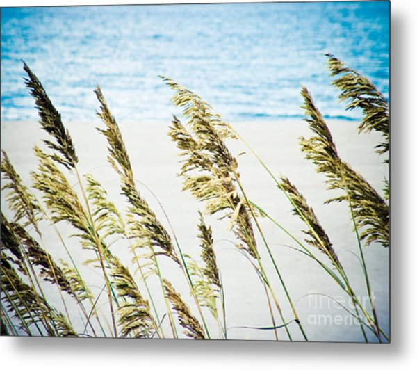 Sea Oats Metal Print by Tonya Laker