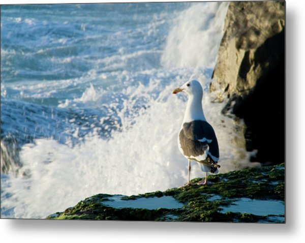 Seagull And The Sea Metal Print
