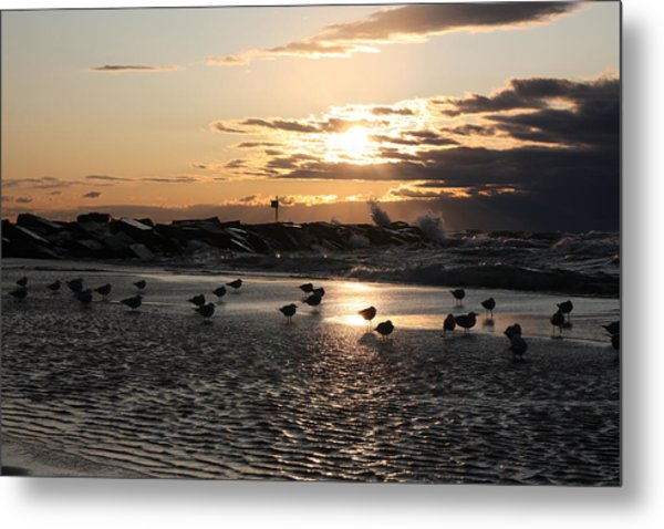 Seagulls In The Surf At Sunset Metal Print by Christopher Purcell