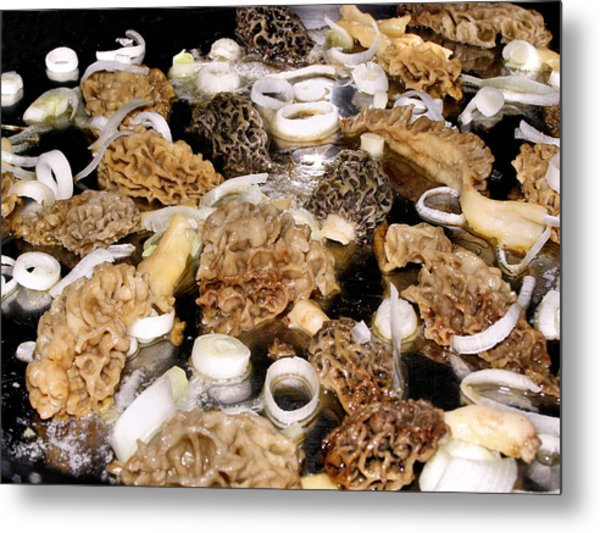 Season's First - Morel Mushrooms Metal Print