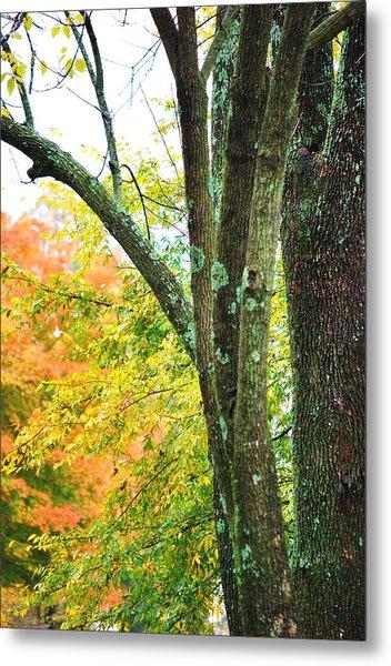 Seasons Metal Print by Trudi Southerland