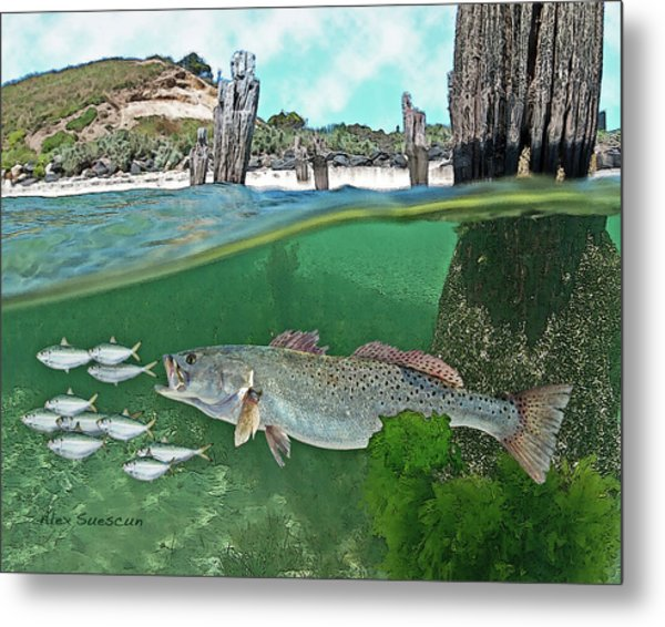 Seatrout Attack Metal Print