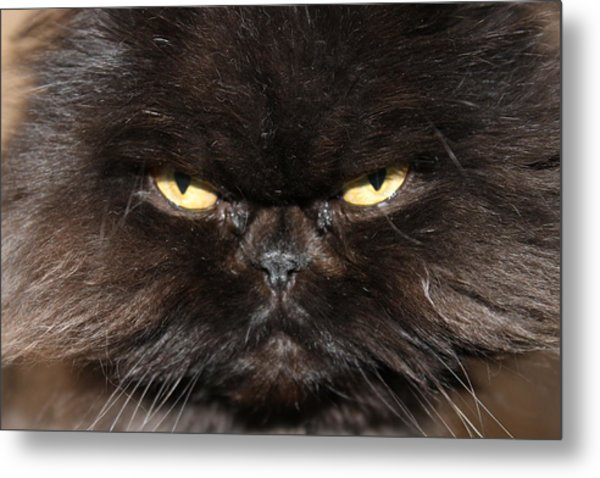 Seriously Metal Print by Angie Wingerd