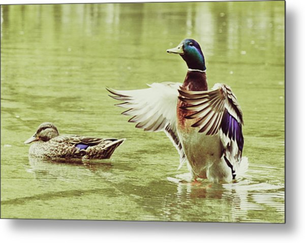 Show Your Colors Metal Print by Andrew Kubica