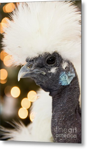 Showgirl A.k.a. Naked Neck Silkies Metal Print