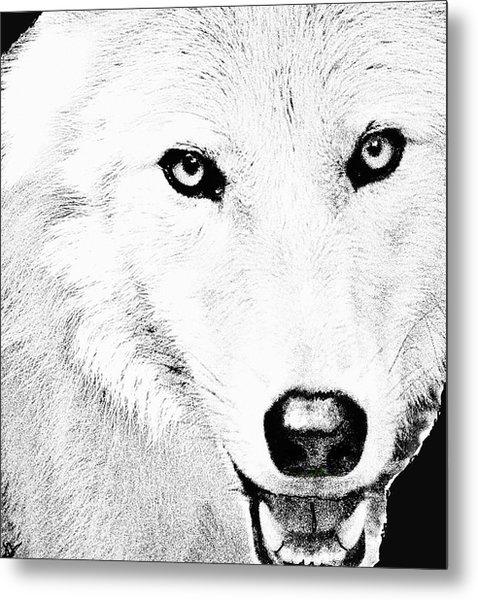 Shy Wolf Metal Print