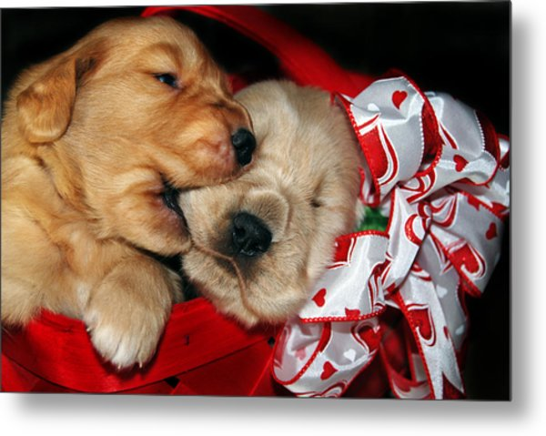 Sibling Rivalry Metal Print by Maria Dryfhout