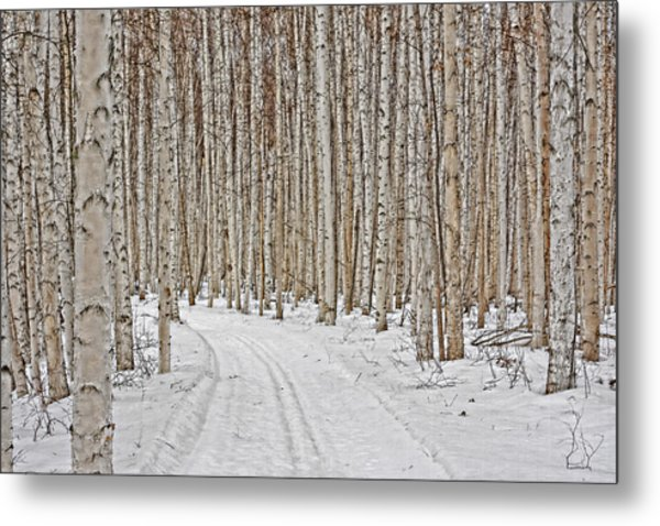 Ski Trail Metal Print