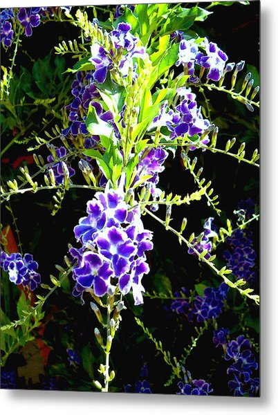Sky Vine In Bloom Metal Print