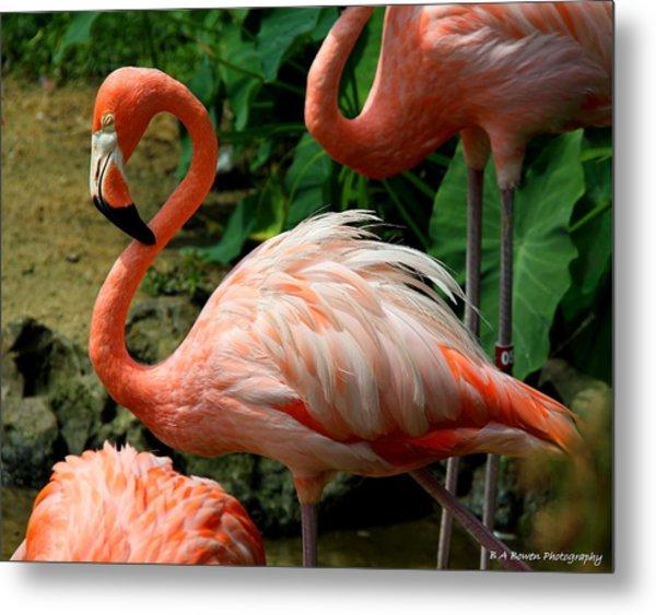 Sleeping Flamingo Metal Print
