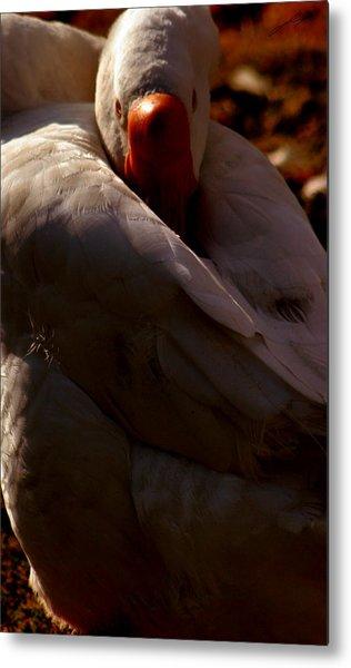 Sleeping Swan Metal Print by LoungeMode Productions