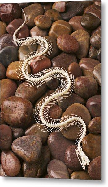 Snake Skeleton  Metal Print