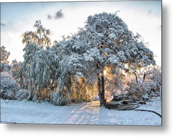 Snow At Sunrise 1 Metal Print by Peter Dyke