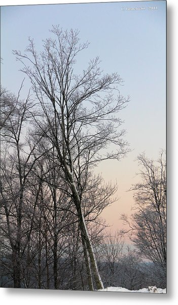 Snow Scene Metal Print by Carolyn Postelwait