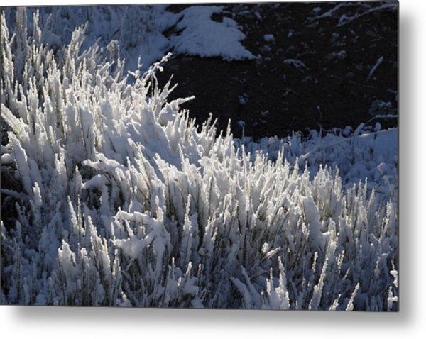 Snowgrass Metal Print