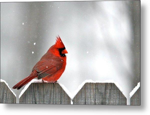 Snowy Cardinal Metal Print by Debbie Sikes