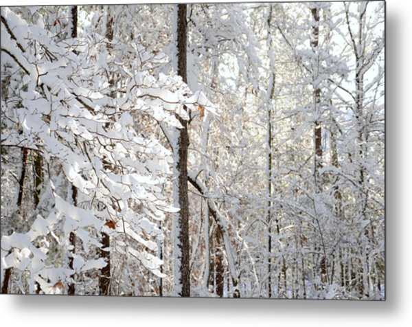 Snowy Dogwood Bloom Metal Print