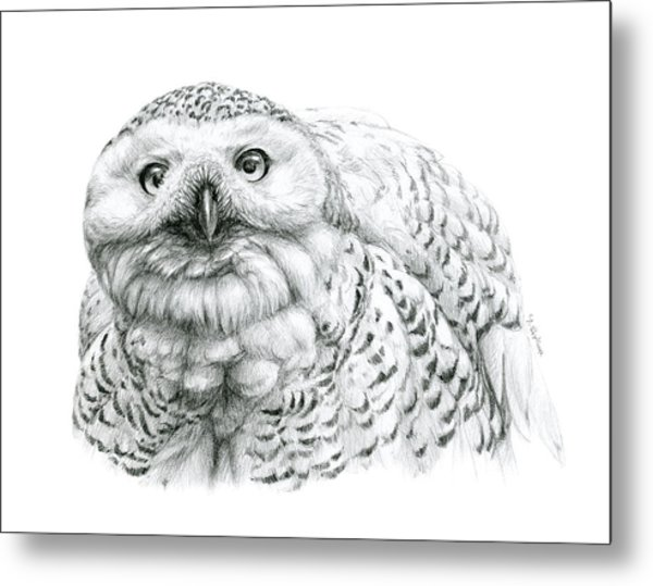 Snowy Owl -bubo Scandiacus Metal Print by Svetlana Ledneva-Schukina