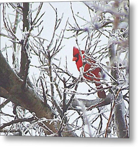 Snowy Red Bird A Cardinal In Winter Metal Print