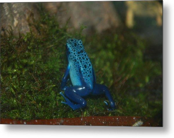 So Blue Metal Print by HP Hwang