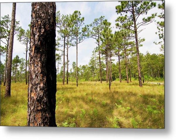 Southeast Pine Savanna Metal Print