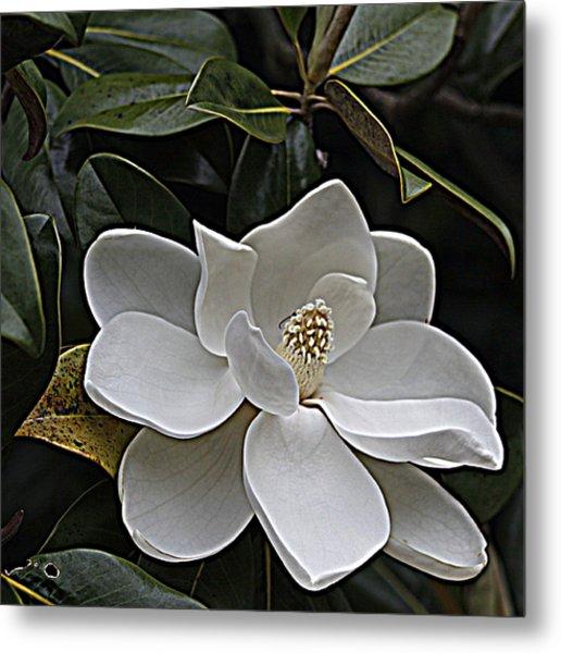 Southern Magnolia Metal Print