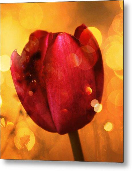 Sparkle Of The Tulip Metal Print
