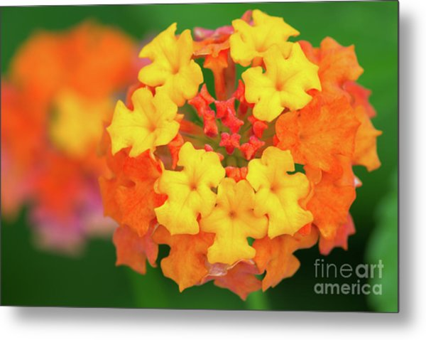 Spring Ornament Metal Print by Steven Dillon