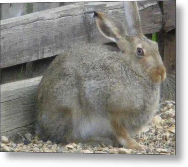 Springtime Rabbit Metal Print