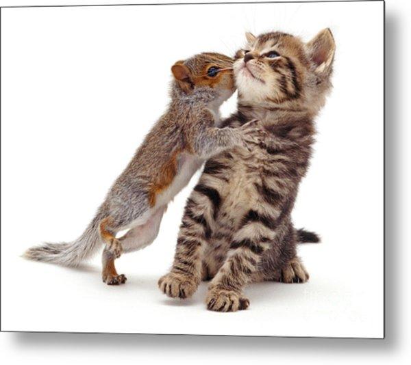 Squirrel Kiss Metal Print