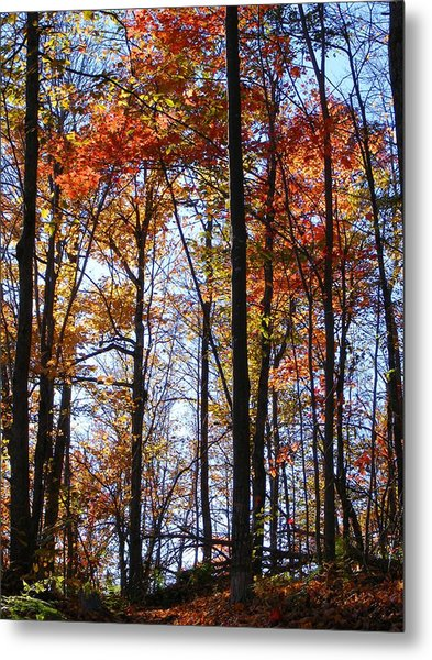 Stark Contrast Metal Print by Dave Martsolf