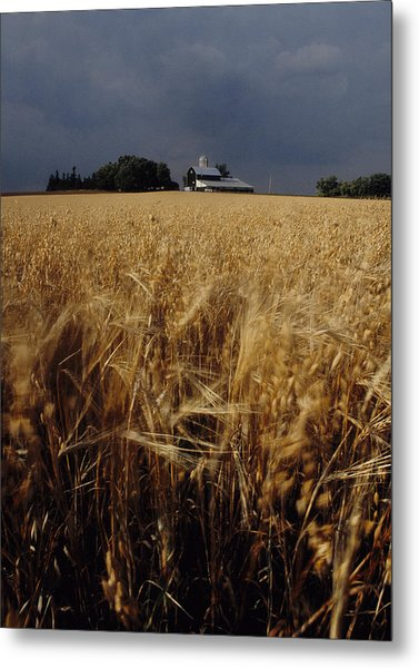 Storm Over Wheat Field  Metal Print