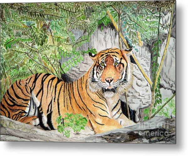 Sumatran Tiger Metal Print by Yvonne Johnstone