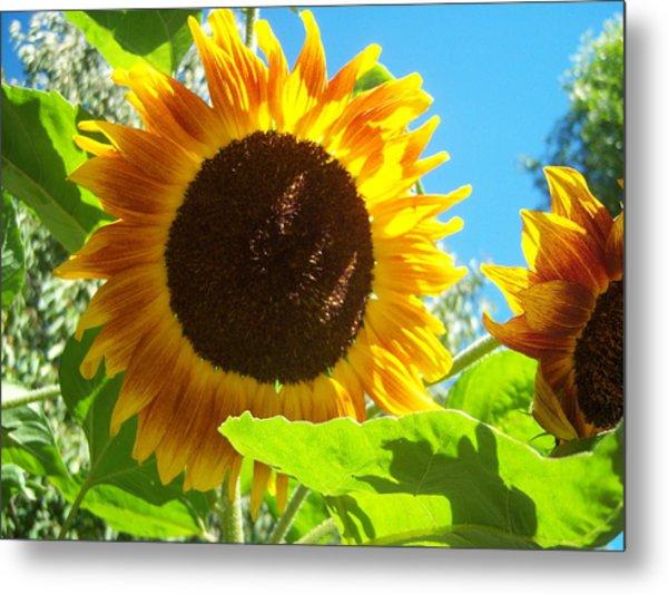 Sunflower 117 Metal Print by Ken Day