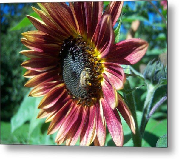 Sunflower 147 Metal Print by Ken Day