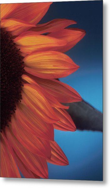 Sunflower Study Metal Print