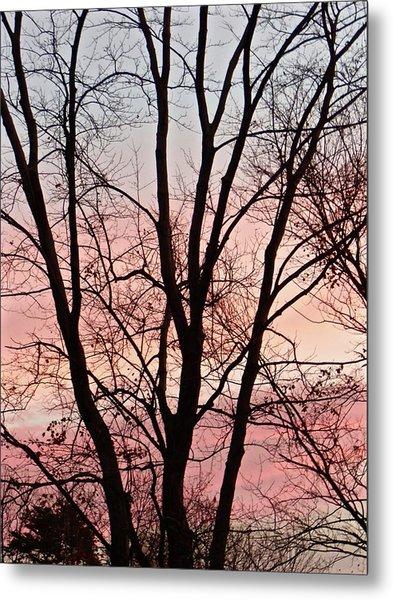 Sunrise Branches Metal Print
