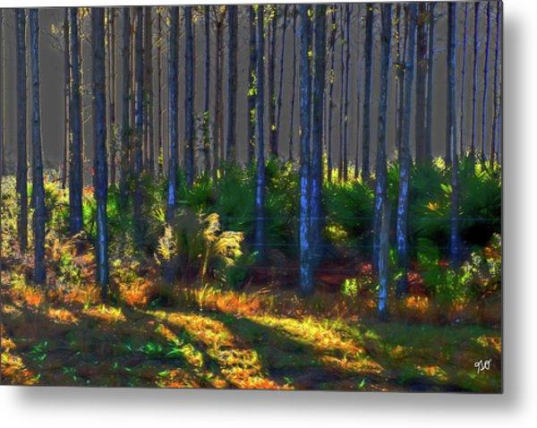 Sunrise On Tree Trunks Metal Print