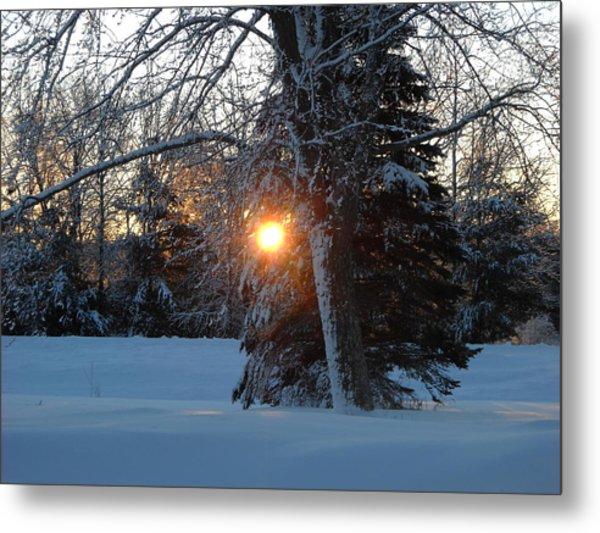 Sunrise Through Branches Metal Print