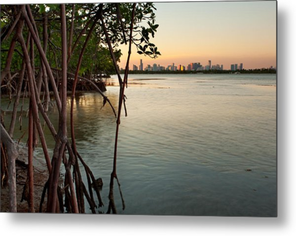 Sunset At Miami Behind Wild Mangrove Forest Metal Print by Matt Tilghman