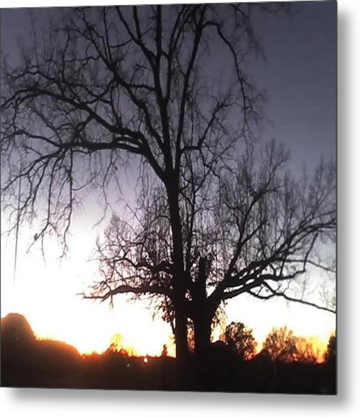 Sunset Metal Print by Carla Fionnagain
