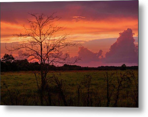 Sunset Pasture Metal Print