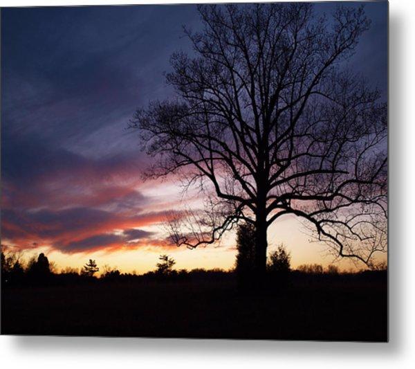 Sunset Tree Metal Print by Michael Edwards